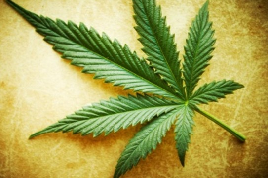 large_Marijuana-leaf-1